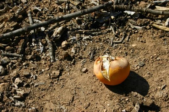 Rotting orange